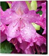 Purple Pink Horizontal Canvas Print