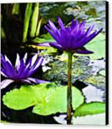 Purple Water Lilies Canvas Print