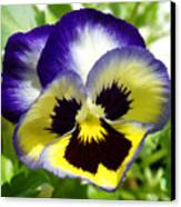 Purple White And Yellow Pansy Canvas Print