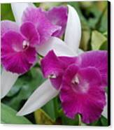Purple White Orchids Canvas Print