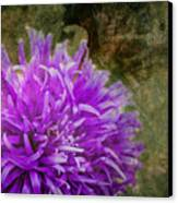 Purple Zinnia Canvas Print by Rod Sterling