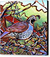 Quail Canvas Print by Nadi Spencer