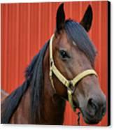 Quarter Horse Canvas Print by Sandy Keeton