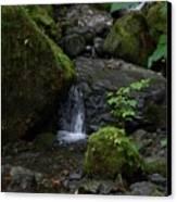 Quinault Washington Rain Forest Canvas Print
