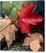 Rain Drops On Leaves Canvas Print