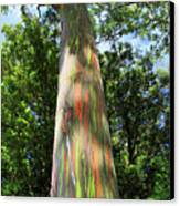 Rainbow Tree Canvas Print by Pierre Leclerc Photography