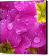 Raindrops On Pink Flowers Canvas Print by Carol Groenen