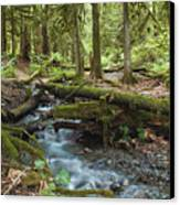 Rainforest At Bridal Veil Falls - British Columbia Canvas Print