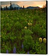 Rainier Wildflower Light Canvas Print