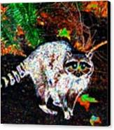 Rascally Raccoon Canvas Print by Will Borden