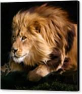 Raw Lion Power Canvas Print