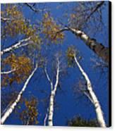 Reach For The Sky Canvas Print by Steve Augustin