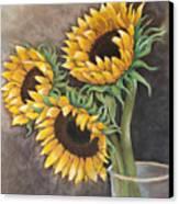 Reaching Sunflowers Canvas Print