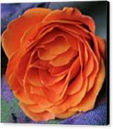 Really Orange Rose Canvas Print