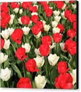 Red And White Canvas Print by Tracy Hall