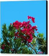 Red Bougainvillea Glabra Vine Canvas Print