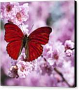 Red Butterfly On Plum  Blossom Branch Canvas Print