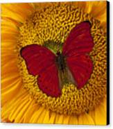 Red Butterfly On Sunflower Canvas Print