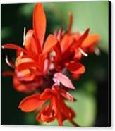 Red Canna Flower Canvas Print by John W Smith III