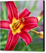 Red Daylily Canvas Print by Ryan Kelly