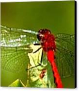 Red Dragon 2 Canvas Print