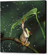 Red-eyed Tree Frog In The Rain Canvas Print by Michael Durham