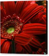 Red Floral Canvas Print