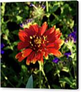 Red Gaillardia Canvas Print by Douglas Barnett