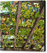 Red Grapes Hanging From A Trellis Napa Valley California Canvas Print by George Oze