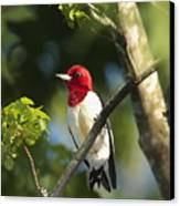 Red-headed Woodpecker Perched On A Tree Canvas Print by George Grall