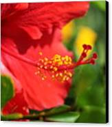 Red Hibiscus And Green Canvas Print