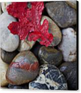 Red Leaf Wet Stones Canvas Print by Garry Gay