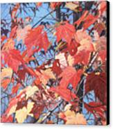 Red Maples Canvas Print by - Harlan