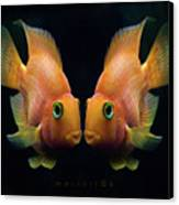 Red Parrot Fish Canvas Print by MariClick Photography