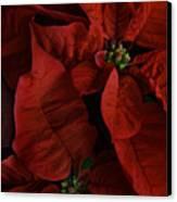 Red Poinsettia Canvas Print by Ann Garrett