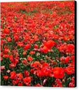 Red Poppies Canvas Print by Juergen Weiss