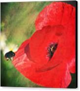 Red Poppy Impression Canvas Print