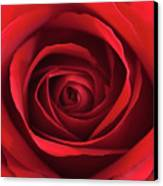 Red Rose Canvas Print by George Lovelace