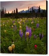 Red Sky Meadow Canvas Print by Mike  Dawson
