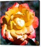 Red Tipped Yellow Rose Canvas Print