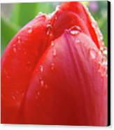 Red Tulip Flower Macro Artwork 16 Floral Flowers Art Prints Spring Dew Drops Nature Art Canvas Print