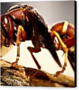 Red Wasp Canvas Print by Ryan Kelly