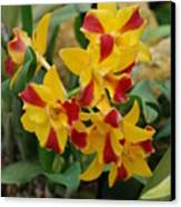 Red Yellow Orchids Canvas Print
