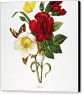 Redoute: Hellebore, 1833 Canvas Print by Granger