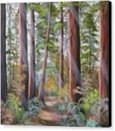Redwood Path Canvas Print