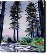 Redwood Reflections   Canvas Print