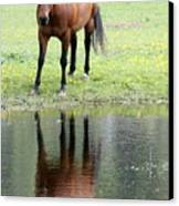 Reflecting Horse Near Water Canvas Print