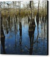 Reflections At Big Cypress Canvas Print