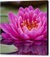 Reflections Of A Waterlily Canvas Print