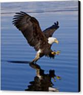 Reflections Of Eagle Canvas Print by John Hyde - Printscapes